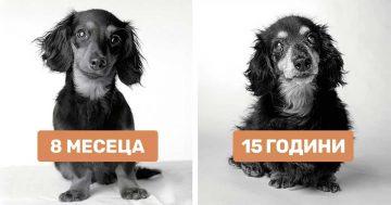 Как остаряват кучетата: затрогвщи снимки на най-добрия приятел на човека | Papataci.com – за твоето свободно време