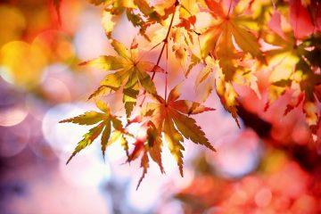 7 Лесни начина да подсилим организма си за наближаващата есен | Saveti.bg