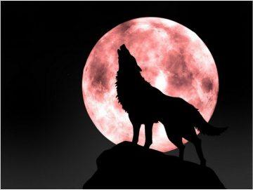 Космогенезис на Древните Българи- Звездната Раса на Вълчите Бойци и Господари – Окултна Езотерика,Конспирации и Алхимия