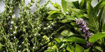 Съвети за здравето: ползи от билки и съвети за болести – Здраве Бг