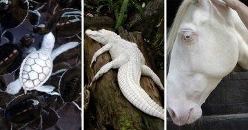 23 животни албиноси, които изглеждат като от друга планета | Papataci.com – за твоето свободно време
