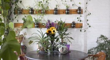 5 вида растения за отглеждане в апартамент |