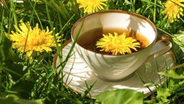 4 полезни билки, които помагат за много болести | Sutrin.com