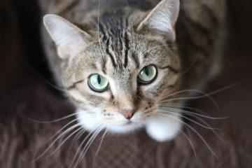 Японска компания осиновява котки, за да понижи стреса на работното място | Sutrin.com