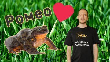 Най-самотната жаба Ромео срещна своята Жулиета