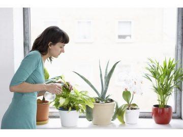 Как да се справим с насекомите-вредители у дома