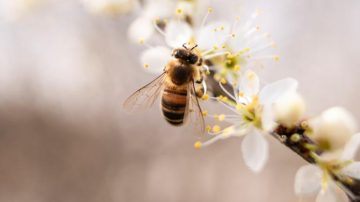 Какво да правим ако ни ужили пчела, оса или ни опари медуза? | Sutrin.com