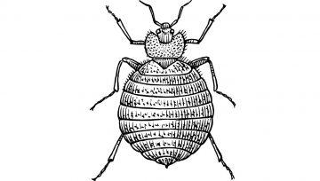 Необходими ли са препаратите срещу насекоми