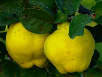 Най-полезните зимни плодове срещу настинки | Sutrin.com