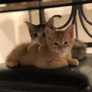 Компания осинови 2 котета, за да повиши духа на служителите си | Sutrin.com