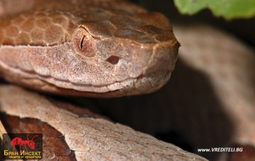 Народни методи и средства за борба със змиите — Бран Инсект