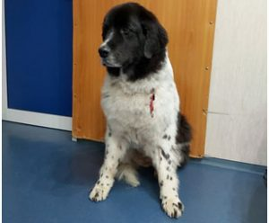 Онлайн ветеринарна консултация