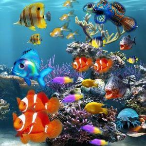 Превърнете аквариума си в прелестен дизайнерски елемент от интериора с LED осветление | Дианид – LED осветление