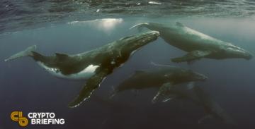 Анализатори на веригата установяват, че още китове купуват Биткойн на промоция – Cryptalaxy