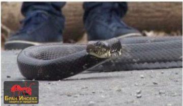 Какво е херпетолог? Как се улавят змии? — Бран Инсект
