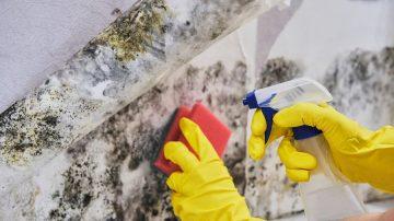 Почистване на мухъл: 4 основни метода за борба с опасните плесени
