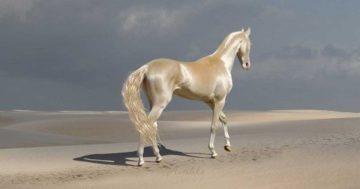 15 зашеметяващо красиви породи коне