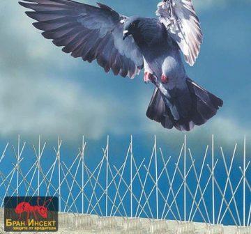 Прогонване на гълъби от покриви и тавански помещения — Бран Инсект