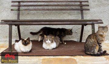 Как да изгоним котките от градината и двора с билки, народни методи и препарати? — Бран Инсект