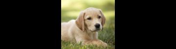 Храна за кучета от онлайн зоомагазин Дай Лапа Варна
